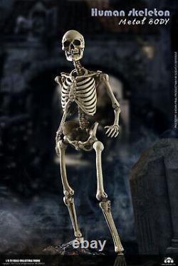 COOMODEL 16 Model Skeleton Body Skull Set Action Figure Doll Collection BS011