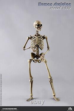 COOMODEL 1/6 Human Skeleton Body & Skull Model 12'' Flexible Action Figure Toys