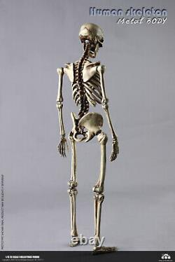 COOMODEL 1/6 The Human Skeleton WithBrain Metal Body BS011 Poseable 12'' Figure