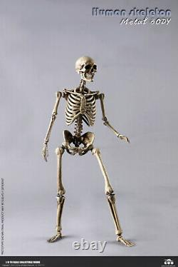 COOMODEL BS011 1/6 The Human Skeleton Metal Body Movable 12'' Figure With Brain