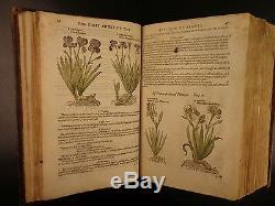 1597 1er John Gerarde Herball Plantes Anglais À Base De Plantes Illustrated Stirpium Botanique