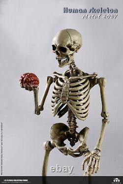 Coomodel 1/6 Corps De Squelette Humain Et Crâne Modèle 12'' Jeux De Figurines À Action Flexible